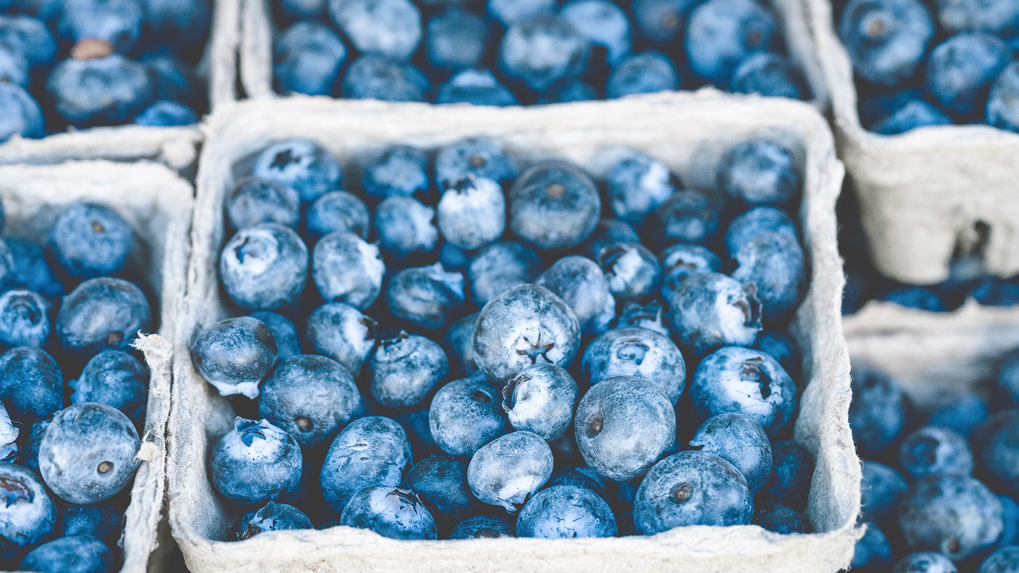 Delicious blueberries ready for pie!