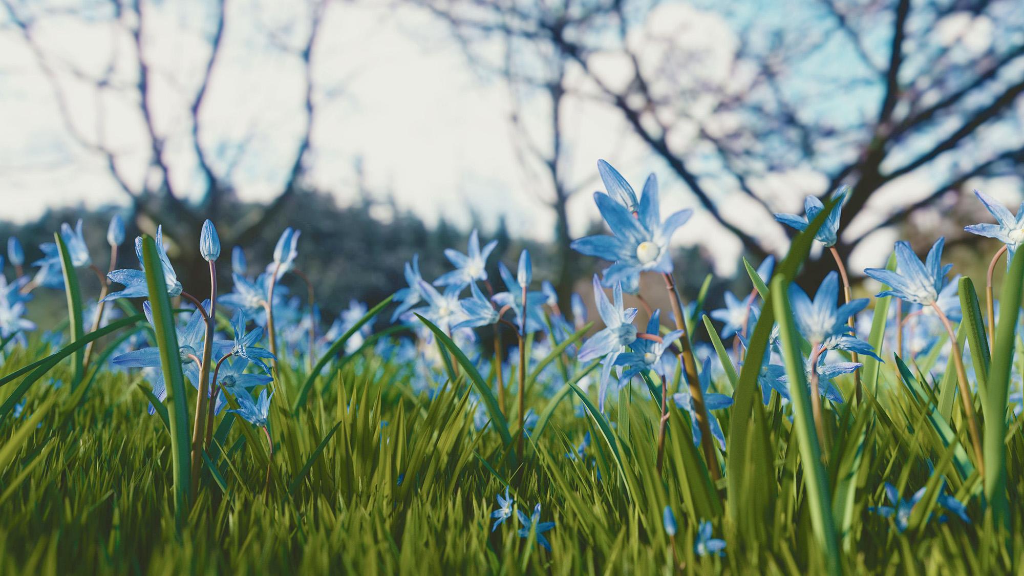 Relaxing in a field of blue flowers.